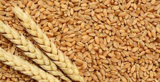 رواں مالی سال 2017-18 کے پہلے گیارہ ماہ کے دوران گندم کی برآمدات میں 1.12ملین ..