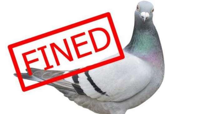 کبوتر کو بس میں بغیر ٹکٹ سفر کروانے پر کنڈکٹر کو جرمانہ