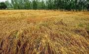 ملک میں بارشوں کا آغاز کسانوں کیلئے پریشانی کا باعث بن گیا