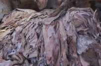 کراچی میں پولیس کاگودام پر چھاپا،گدھوں اور کتوں کی کھالوں سے بھری 40 ..