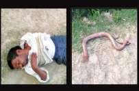 بھارتی شخص نے زہریلے سانپ کو کاٹ لیا ، سانپ نے مجھے کاٹا میں نے بدلہ ..