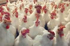 لاہور، زندہ برائلر، گوشت و انڈوں کی قیمتیں