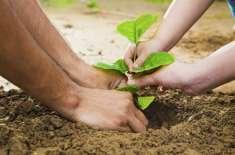 پنجاب میں درختوں کی کٹائی پر پابندی عائد، خلاف ورزی پر 25 ہزار فی درخت ..