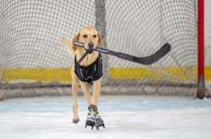 'World's first' ice skating dog