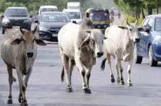 بھارتی ریاست اتراکھنڈ کی ریاستی اسمبلی نے گائے کوراشٹرماتاقراردیدیا