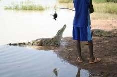 افریقا کے اس گاؤں میں انسان اور مگر مچھ ایک ساتھ سکون سے رہتے ہیں