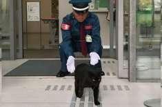 جاپان کے میوزیم میں2 سال سے  داخل ہونے کی ناکام کوششیں کرنے والی بلیان ..