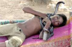 7 Year Old Boy Sleeps, Bathes and Plays with Deadly Snakes