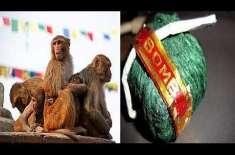 کریکر بم سے لیس بندروں کا حملہ، 3راہگیر زخمی