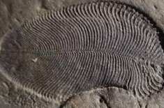 Scientists Discover 558 Million-Year-Old Fossil Is Actually The World's Oldest Known Animal