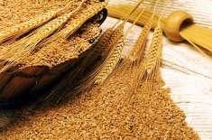 سندھ کابینہ نے گندم کی امدادی قیمت 14سو6روپے فی چالیس کلوگرام مقررکرنے ..