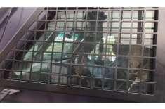 نواز شریف کی احتساب عدالت میں پیشی، لیگی کارکن بکتر بند گاڑی کا گھیراؤ ..