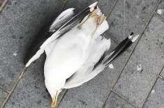 برطانوی پولیس پرندے کو ہلاک کرنے والے شخص کی تلاش میں،تحقیقات کا آغاز