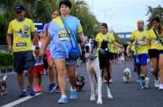 فلپائن میں کتوں کی بامقصد دوڑ