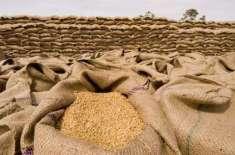 5 سال بعد گندم کی امدادی قیمت میں اضافہ کیے جانے کا امکان