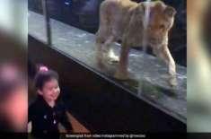 استنبول کے کیفے میں شیشے کے انکلوژر میں رکھے گئے شیر پر آن لائن صارفین ..