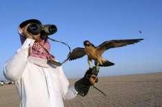 پاکستان میں تلور کے شکار کیلئے دبئی کے شاہی خاندان کے فرد کو اجازت نامہ ..