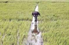 زرعی مقاصد کیلیےنہری پانی پر آبیانہ کی شرح میں اضافےکی تجویز