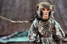 ایفی ڈرین کیس،کچہری میں بندر گھس آیا،سائلین کی دوڑیں لگ گئیں
