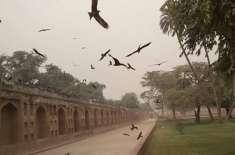 لاہور کے شہری غضب ناک چیلوں کا شکار ہونے لگے