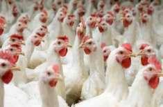 ملائشیا پاکستان سے حلال گوشت درآمدکرے،ہمیں حلال فوڈز، گوشت، پولٹری، ..