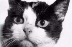 خلا میں پہنچنے والی پہلی  بلی کو آخرکار وہ مقام مل ہی گیا جس کی وہ حقدار ..