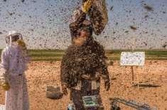 شہد کی مکھیوں سے بھری چادر لپیٹے سعودی شہری گینز بک میں نام لکھوانے ..