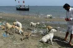 """پاکستان کے قابل فخر اور نیک دل ماہی گیر """"کتوں کے جزیرے """" میں کھانا .."""
