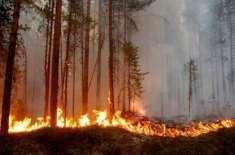 سویڈن ،جنگلات میں لگنے والی آگ پر قابو پا لیا گیا