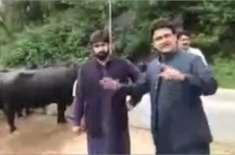 سینیٹر فیصل جاوید کو وزیراعظم ہاؤس کی بھینسوں کے ساتھ ویڈیو بنا کر ..