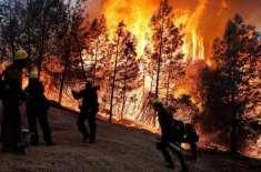 کیلی فورنیا کے جنگلات میں آگ سے ہلاک ہونے والے افراد کی تعداد 42 تک پہنچ ..