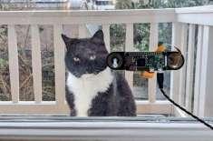 انجینئر نے اپنی بلی کے لیے بھی چہرہ شناسی کا سافٹ وئیر بنا لیا
