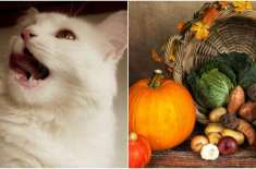 Pet Owner Faces Criticism for Putting His Cat on a Vegan Diet