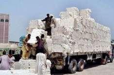 روئی کی اسپاٹ ریٹ میں فی من 900 روپے کی نمایاں کمی