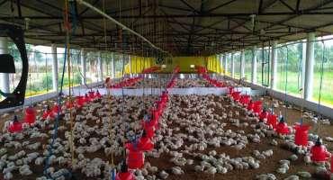 قلات میں مرغی کا گوشت ناپید ہو گیا،بڑھتی ہوئی قیمتوں کی وجہ سے مرغی ..