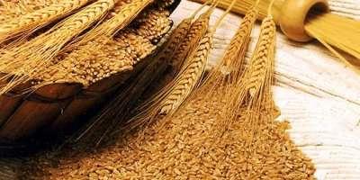 گندم کی امدادی قیمت کے تعین ،گداگری کی روک تھام اورگداگروں کے خلاف ..