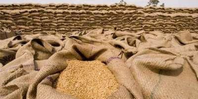 گندم کی زیادہ سے زیادہ پیداوار حاصل کرنے کیلئے تصدیق شدہ تخم استعمال ..