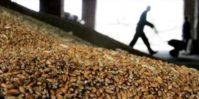 امریکا میں مکئی، سویابین اور گندم کے نرخوں میں اضافہ