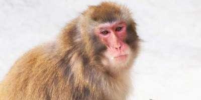 پاکستان سمیت دنیا بھر میں بندروں کا عالمی دن منایا گیا