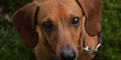 ہوائی جہاز سے گرکر دنیا کے خشک ترین صحرا میں 6 دن گزارنے والا کتا زندہ ..