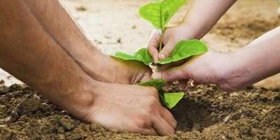 گرین اینڈ کلین پاکستان مہم کے سلسلے میں ٹی ایم اے ڈیرہ کی جانب سے پودے ..