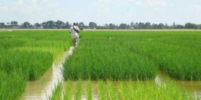 پاکستان میں دستیاب پانی کا 93 فیصد زرعی مقاصدمیں استعمال ہوتا ہے