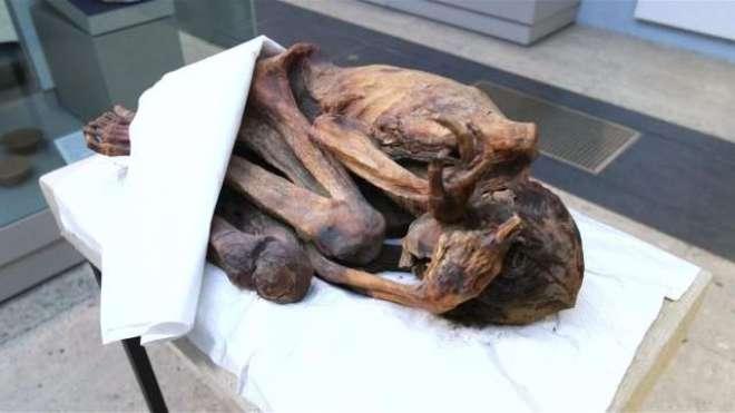 دنیا کا قدیم ترین ٹیٹو قدیم مصری ممیوں پر پایا گیا