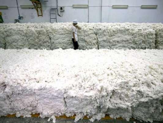 کپاس کی پیداوار میں 8 لاکھ گانٹھوں کی غیر معمولی کمی