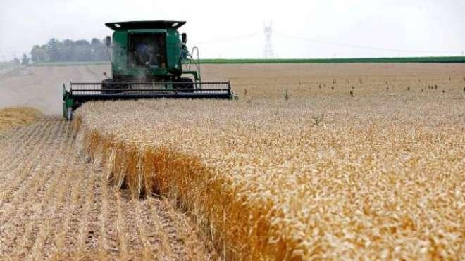 امریکا میں گندم کے نرخوں میں 2 فیصد اضافہ
