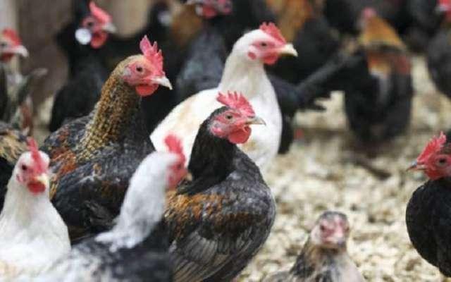 برائلر گوشت کی قیمت میں 10روپے فی کلو اضافہ