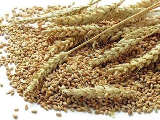 گندم خریداری مہم کے سلسلہ میں ادائیگی پالیسی کا اعلان