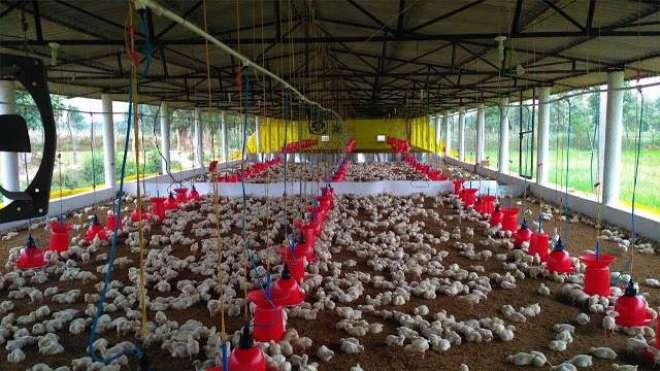 برائلر گوشت کی قیمت میں6روپے فی کلو اضافہ
