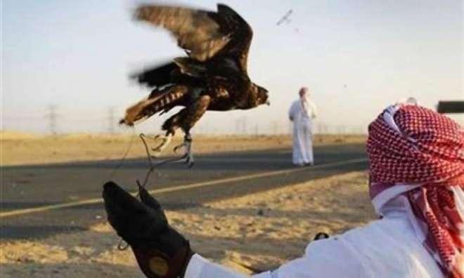 پاکستان میں شکار کیلئے آنے والے 7 قطری شہری گرفتار کر لیے گئے