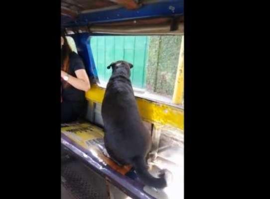 کتا اکیلا ہی بس میں سوار ہو کر پیچھا کرتے ہوئے مالکن تک جا پہنچا